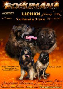Щенки кавказской овчарки д р 17 10 2017